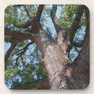 Magnificent Oak Tree Beverage Coaster