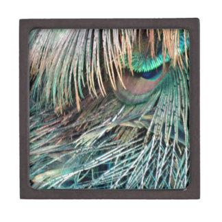 Magnificent Peacock  Feather Gift Box
