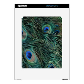 Magnificent Peacock Feathers Decals For The iPad