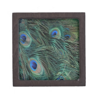 Magnificent Peacock Feathers Gift Box