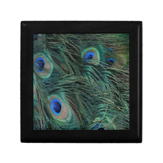Magnificent Peacock Feathers Keepsake Box