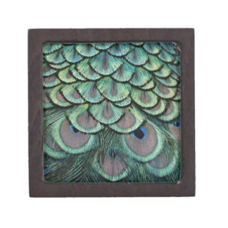Magnificent Peafowl Feather Eyes Gift Box