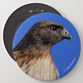 Magnificent Red-Tailed Hawk in the Sun Button