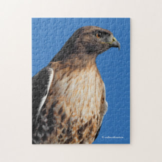 Magnificent Red-Tailed Hawk in the Sun Jigsaw Puzzle