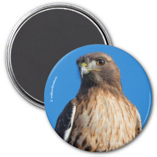 Magnificent Red-Tailed Hawk in the Sun Magnet