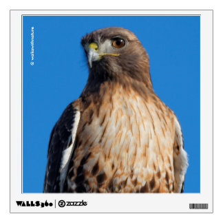 Magnificent Red-Tailed Hawk in the Sun Wall Sticker