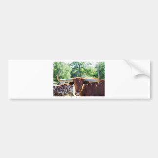 Magnificent Texas Longhorn Bull Bumper Sticker