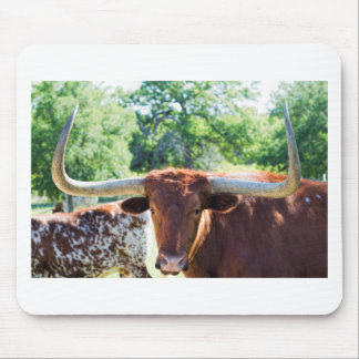 Magnificent Texas Longhorn Bull Mouse Pad