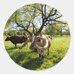 Magnificent Texas Longhorn Cattle Sticker