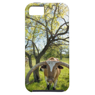 Magnificent Texas Longhorn Steer iPhone 5 Cover