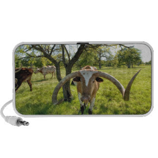 Magnificent Texas Longhorn Steer Laptop Speaker