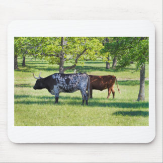 Magnificent Texas Longhorn Steers Mouse Pad