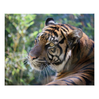 Magnificent Tiger Mother Poster