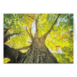 Magnificent Tree Photo  Greeting Card