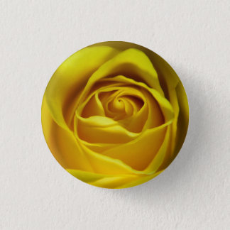Magnificent yellow rose macro picture button