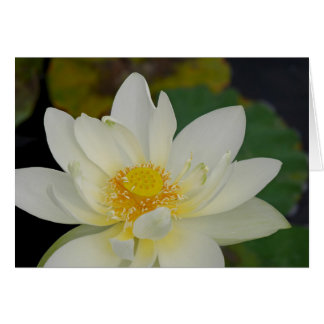 Magnificient Lotus Greeting Card