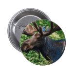 Magnificient Moose Button
