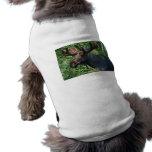Magnificient Moose Dog T Shirt