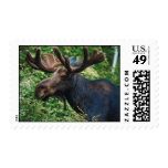 Magnificient Moose Postage