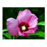 Magnífico en postales rosadas