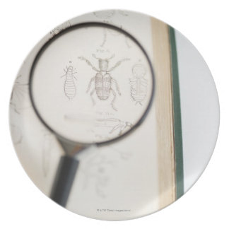 Magnifying glass over book showing insects plate