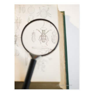 Magnifying glass over book showing insects postcard