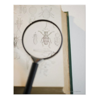 Magnifying glass over book showing insects poster