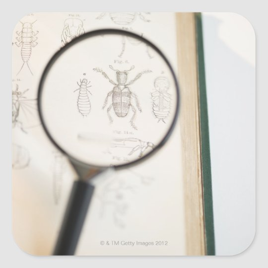 Magnifying glass over book showing insects square sticker