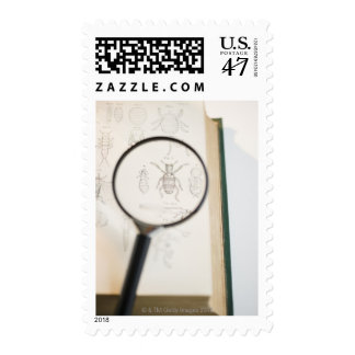 Magnifying glass over book showing insects stamp