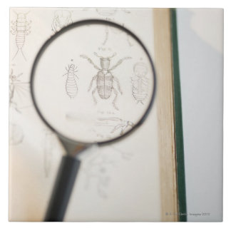Magnifying glass over book showing insects tile