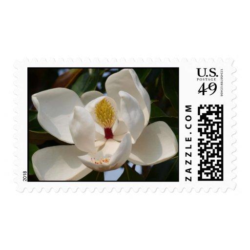 Magnolia 72 postage
