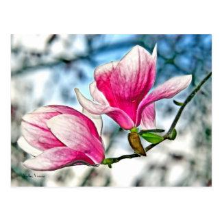 Magnolia and Blue Sky Postcard