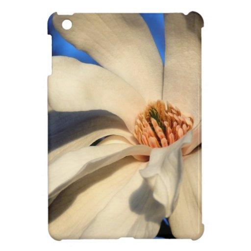 Magnolia blanca