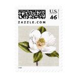 Magnolia blanca elegante