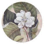 Magnolia blanca meridional elegante Catesby Plato Para Fiesta