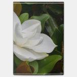 Magnolia blanca notas post-it