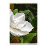 Magnolia blanca papelería de diseño