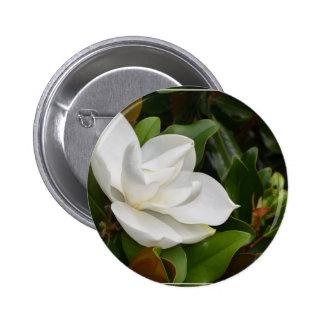 Magnolia blanca pins