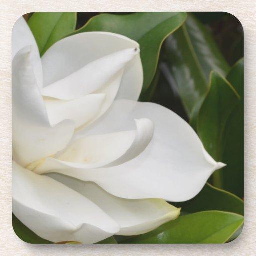 Magnolia blanca posavasos de bebida