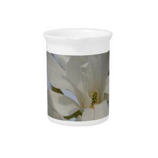 Magnolia blanca que florece en la primavera jarrones