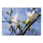 Magnolia blanca tarjeta