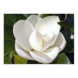 "Magnolia Bloom 5"" X 7"" Invitation Card"