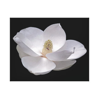 Magnolia Bloom and Firefly Canvas Print