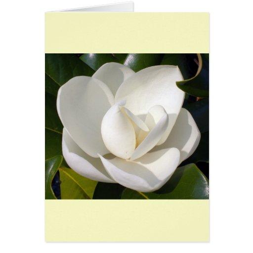 Magnolia Bloom Cards