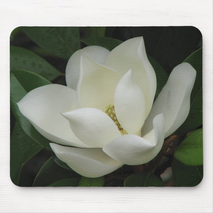Magnolia Bloom Mouse Pad