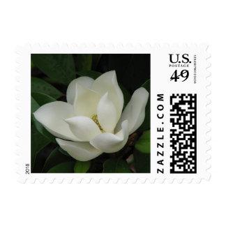 Magnolia Bloom Postage Stamp