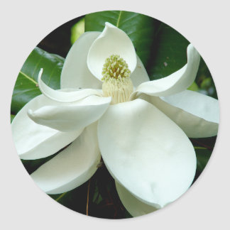 Magnolia Bloom Sticker