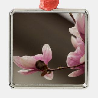 magnolia blooming  on tree square metal christmas ornament