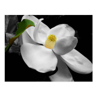 Magnolia Blossom Marketing Postcard