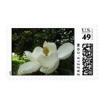Magnolia Blossom Postage Stamp